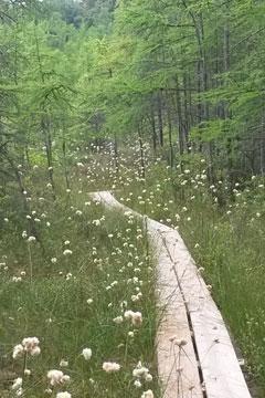 Beulah Bog State Natural Area Wisconsin Dnr