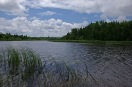 Mink River Estuary