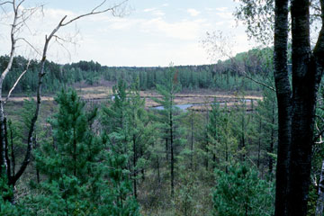 Squirrel River Pines