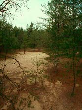 Arena Pines and Sand Barrens