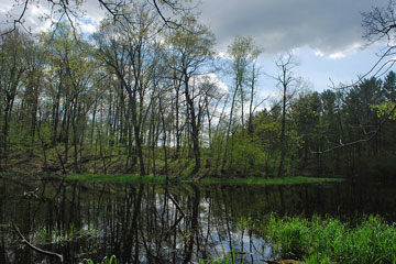 Kettle Hole Woods