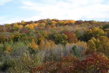 Kettle Moraine Red Oaks
