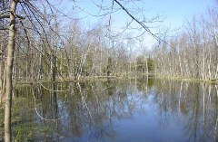 Coffey Swamp