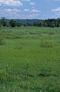 Trempealeau River Meadow