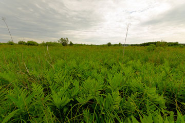 Kinnickinnic Wet Prairie