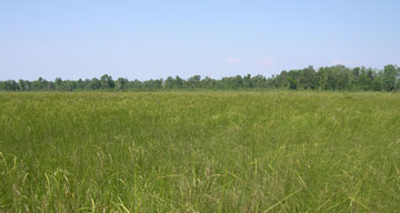 Northern sedge meadow