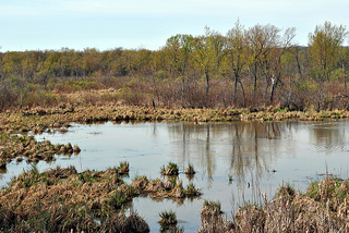Nelson-Trevino Bottoms