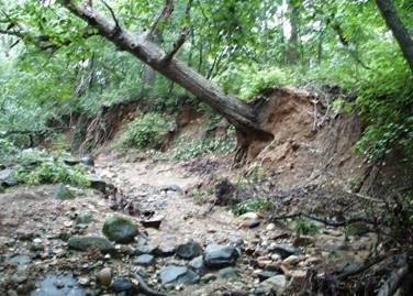 tree falling down stream bank