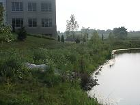 Pond with landscaping.