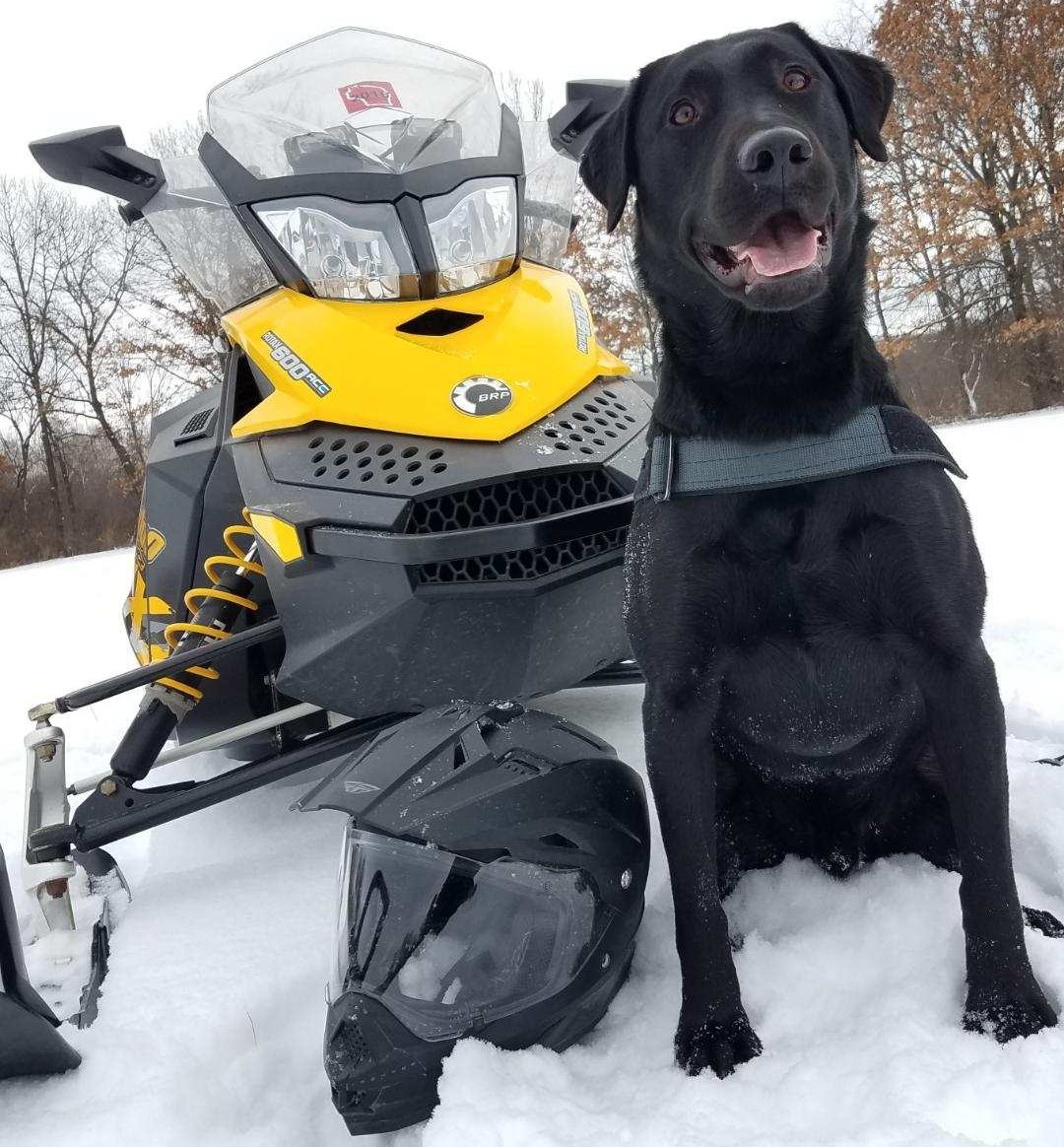 Thanks to the many who maintain our trails! K9 Bridger waits for WDNR Recreation Warden Heather Gottschalk for the day's patrols.