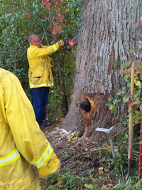 'Hey, Milltown fireman, watch where you put that saw! the cub looks to be saying.