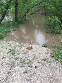 The Rush River closes in on an unsuspecting fawn.