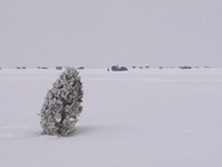 Local fishing clubs use fir trees stuck in the Lake Winnebago snow cover to mark ice conditions and access areas.