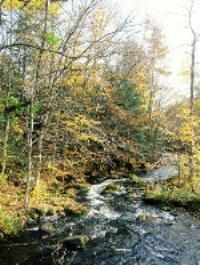 Wolf River in autumn