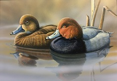 2019 Wisconsin Waterfowl Stamp by Jon Rickaby of Green Bay WI