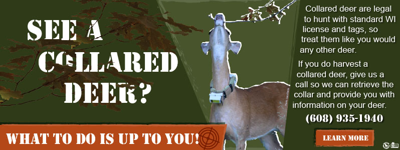 Wildlife and Forestry Research - Predation and Fawn